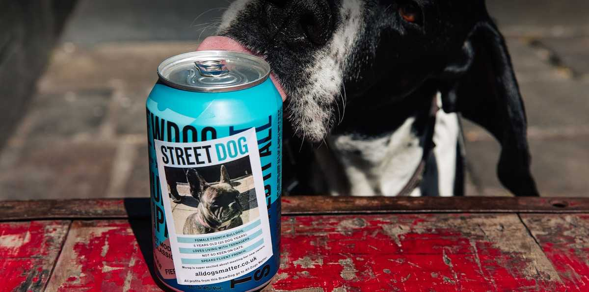 BrewDog street dog charity partnerships example